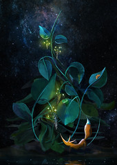Drop (Douvou) Tags: plant art night digital photoshop stars space fox universe