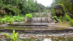 Atlanta Botanical Garden Earth Goddess (digital version) - Atlanta Botanical Gardens - Blackberry Z10 (Logos: The Art of Photography) Tags: flower