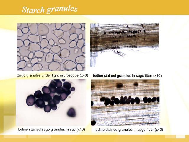 starch-granules