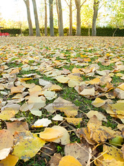 Dead leaves on the ground (Carlos Ciudad - Stock Photography) Tags: park parque autumn light sunset sky espaa fall luz colors grass leaves yellow vertical bar dead hojas atardecer spain europa europe chairs terrace ground olympus colores amarillo leon cielo otoo terraza gettyimages sillas suelo hierba poplars chopos populus muertas castillayleon e520 lacandamia gettyimagesspain cctrillastock
