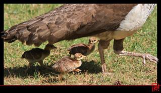 Sous la protection de maman !