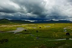 (wangxyv) Tags: clouds river plateau prairie sichuan      serxu