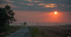 Brumeuses Landes... (Jérôme Cousin) Tags: cloud sun fog clouds sunrise landscape soleil nikon 40 nikkor nuage nuages paysage brume landes 24120 brumes d700