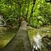 Un ponte sopra un ruscello in Palenque