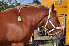 DSC_0063 (- MB Photo -) Tags: de cheval des 09 labour concours 07 vache tracteur vaches chevaux bourg comice agricole comptes 2013 bourgdescomptes |labourer