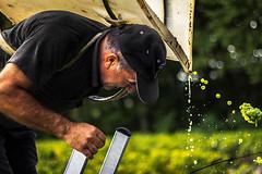 The Harvester (JOLIVETV) Tags: france green les 50mm vineyard october wine f14 harvest cher grapes sancerre rocs 2013 canon60d pascaljolivet jolivetv
