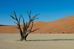 Scenes of Sossusvlei (Lourika Reinders Photography) Tags: africa old travel trees red sunrise landscape dead photography sand scenery dunes year climbing namibia scenes 900 highest dooie sossusvlei deadvlei vlei sossus namibianamibia gobignamibia namibiantourismboard lourikareindersphotography