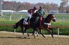 "2012-11-16 (27) r1 Omar Hernandez on #2 Flattering Annie (JLeeFleenor) Tags: photos photography marylandracing marylandhorseracing md jockey جُوكِي ""赛马骑师"" jinete ""競馬騎手"" dżokej jocheu คนขี่ม้าแข่ง jóquei žokej kilparatsastaja rennreiter fantino ""경마 기수"" жокей jokey người horses thoroughbreds equine equestrian cheval cavalo cavallo cavall caballo pferd paard perd hevonen hest hestur cal kon konj beygir capall ceffyl cuddy yarraman faras alogo soos kuda uma pfeerd koin حصان кон 马 häst άλογο סוס घोड़ा 馬 koń лошадь horseracing thoroughbredracing laurelpark maryland"