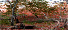 Long Forest Composition (Tim Noonan) Tags: autumn trees red white abstract colour green texture nature leaves digital forest photoshop landscape grey branches signature textures stump awardtree maxfudgeawardandexcellencegroup vividnationexcellencegroup