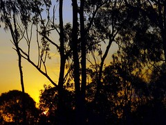 AND THE SOFTEST BRIGHTEST MORNING SUNLIGHT... (Umbrae Galeria) Tags: light sunset brazil sky sun riodejaneiro clouds sunrise dawn soleil shadows lumire ciel nuages brsil ombres aube coucherdusoleil everdusoleil procvratormeafecit