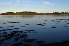 Strangford lough from  Castleward (conall..) Tags: november sea day shore scape strangfordlough castleward pwpartlycloudy