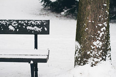 Bench and tree (itspaulkelly) Tags: park wood winter white snow cold tree bench 50mm poland polska warsaw snowing warszawa azienkipark parkazienkowski royalbathspark