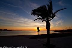 Palm Tree (paulo_1970) Tags: rio canon river lisboa palmtree 7d tejo 1022mm palmeira f3545 riotejo canon1022mmf3545 canon7d paulo1970