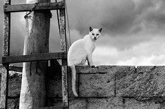 Gato Branco, Itaoca (Jim Skea) Tags: blackandwhite muro wall cat gato escada ladder pretoebranco whitecat itaoca gatobranco calho thecatwhoturnedonandoff