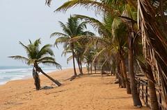 888_6551 (ssnaige2003) Tags: ocean africa trees beach nature coast palm lagos nigeria