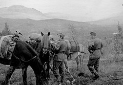 Ready to go (estenvik) Tags: horse norway army norge military norwegian pack erik 1972 pferd hest mlselv troms mauken hst packhorse klv verbygd klvhest klvkompaniet estenvik erikstenvik