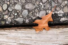 Triple texture (Dear Molly Anne) Tags: texture leaf sidewalk photoaday 365 vision:sky=0768 vision:outdoor=0954