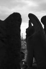 Can't take my eyes of off you (mariannadivaga) Tags: paris france notredame francia gárgolas summer2009