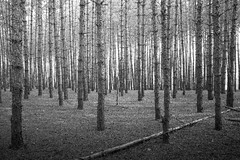 Black and White Forest (personaltrainertoronto) Tags: blackandwhite forest landscape samuel engelking