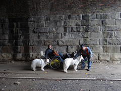 """Inside The Histroic Howard Tunnel And We Are Giving The Loving To Chase & Jag! • <a style=""""font-size:0.8em;"""" href=""""http://www.flickr.com/photos/96196263@N07/13552241025/"""" target=""""_blank"""">View on Flickr</a>"""