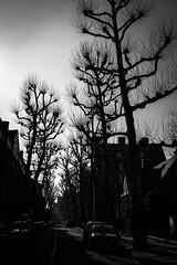 Trees (The-E) Tags: trees canon1740 canon5dmk3 london
