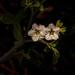 Teeny Tiny Wildflower