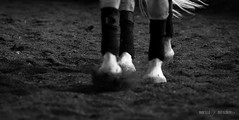 DSC_4180 (saladino85) Tags: animalspeople blackandwhite horses movement skill colors