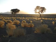Chad Tibesti near Yebbi Bou (ursulazrich) Tags: tschad chad ciad tchad sahara tibesti afrika africa afrique flora acacia gras bushes vegetation desert sunset
