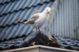 Bird On A Tile