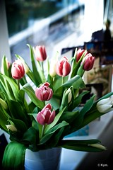 Happy Holidays! (Kym.) Tags: flower green greensflowers pink treat tulip white window thenetherlands easter windowsill