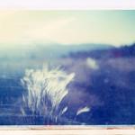Humphreys Peak, AZ thumbnail