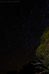 Night Sky (Jenniferhg97) Tags: sky skyscape night trees stars astrophotography milky way australia nsw new south wales
