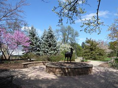 Lombard, IL, Lilacia Park, Redbud Tree, Blue Spruce Trees, and Deer Sculpture (Mary Warren (8.3+ Million Views)) Tags: lombardil lilaciapark spring nature flora plants blossoms flowers blooms bench rosebud trees bluespruce metal bronze art sculpture deer