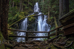 When I Saw You Standing There (writing with light 2422 [not pro}) Tags: richborder rangerfalls washingtonstate waterfall mountrainiernationalpark carbonriverentrance trail landscape sonya77 darlingtonia
