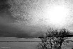 (Antoine Le Blet) Tags: noiretblanc blackandwhite whiteandblack paysage arbre tree neige snow québec canada antoineleblet
