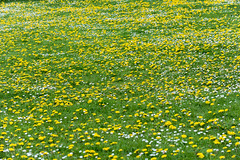 Northampton (stephanrudolph) Tags: d750 northampton handheld uk gb england europe europa 70200mm 70200mmvr 70200mmf28gvr flower gras grass