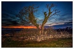 Burning Blue (D.K.o.w) Tags: nendrummonastery comber strangfordlough ruins stpatrick monastery sunset canon7dmkii landscape northernireland orange blue roundtower tree maheeisland