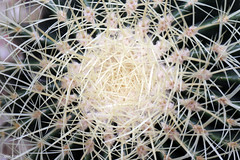 Cactus. (Gillian Floyd Photography) Tags: cactus spines