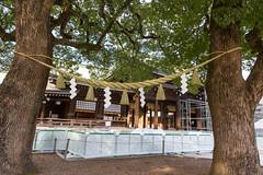 """Verheiratete Bäume"" im Meiji Jingu Shrine"