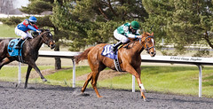 Pulling Away (Casey Laughter) Tags: racehorse turfway thoroughbred horse horseracing horses winner loser fun racing racetrack race track saddlecloth tack gate taa