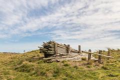 An Old Woodpile (Mac ind Óg) Tags: spring beach stcyrusnationalnaturereserve aberdeenshire montrose walking woodpile stcyrus scotland holiday landscape saintcyrus