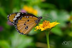 Bannerghatta Park, Bangalore (missperfectpitch) Tags: bangalore india
