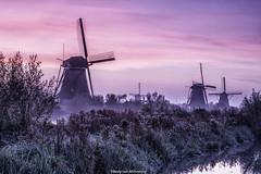 Pink sunrise at Kinderdijk (rudyvanmiltenburg) Tags: kinderdijk windmill netherlands holland sunrise landscape krimpenerwaard