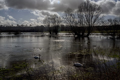 Flooding flashback - Amesbury, Wiltshire (Blue Rock Fox) Tags: amesbury wiltshire floods flooding trees countryside nature backlit intothelight intothesun water river swans birds environment britishcountryside englishcountryside ukcountryside rural reflections clouds