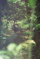 F1000002_lr (chi.ilpleut) Tags: singapore 2017 myday march outdoor outing film ilovefilms shootfilm kodakfilm expiredfilm jurongbirdpark birds seeing greenery ilovegreen analogue analog track grain