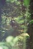 F1000002_lr (chi.ilpleut) Tags: singapore 2017 myday march outdoor outing film ilovefilms shootfilm kodakfilm expiredfilm jurongbirdpark birds seeing greenery ilovegreen analogue analog track grain