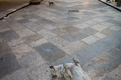 . (Joanna Mrowka) Tags: trapani sicily dog dream cat streetphotography street travelphotography travel littledoglaughedstories