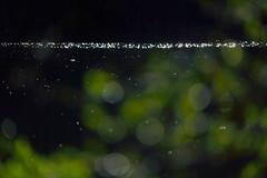 days at the lake ... (Sandra Bartocha) Tags: sandrabartocha spring lake views lakeviews frühling dark