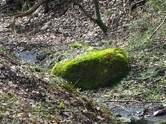 Migrant (Peter P. Schüler) Tags: iceage eiszeit hattingen ruhrgebiet heiligerstein flickr peterpe1
