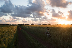 Sunset in Israel (ilyafurz) Tags: field bycicle rye clowds oryehuda nature sonya77ii поле рожь природа велосипед закат flare בבע סוני מינולטה אופניים שיפון שקיעה שדה облака עננים